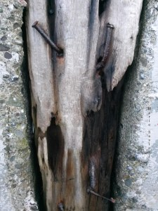 nailed-drift-wood-in-between-cement-bolinas-near-beach-11-30-16