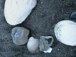 shells-in-sand-bolinas-11-30-16